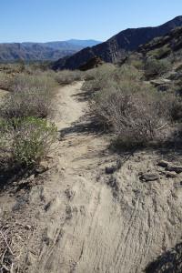 Trail 600x800