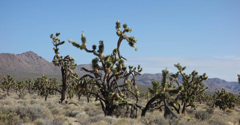 Mojave 03