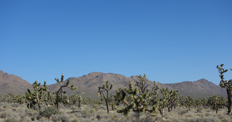 Mojave 04