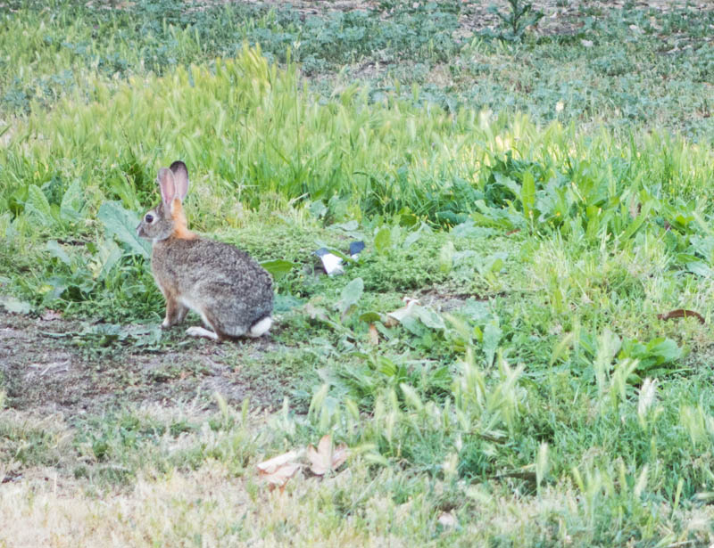 Also had lots of rabbits to entertain us.