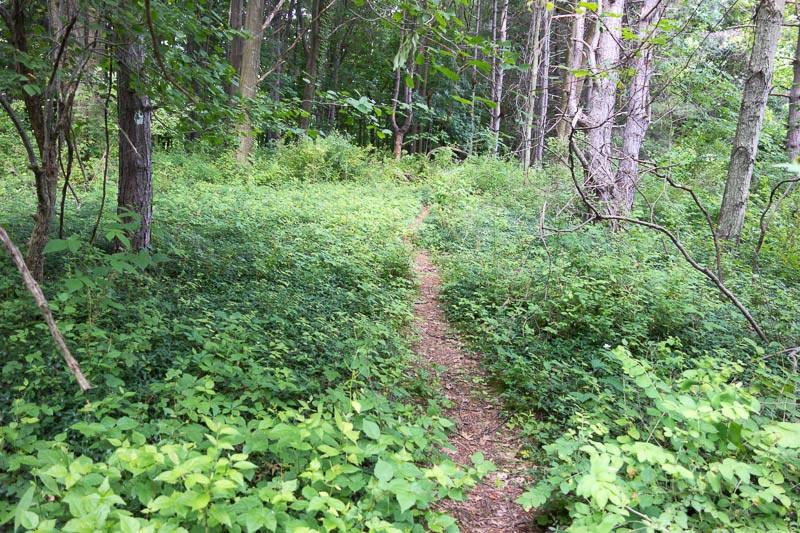 buckeye-trail-1-2