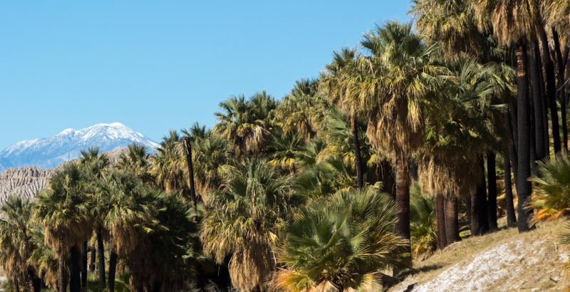 Mt.-San-Gorgonio-and-Palms