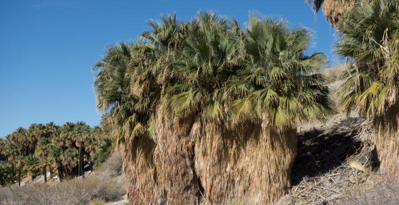 Palms-1