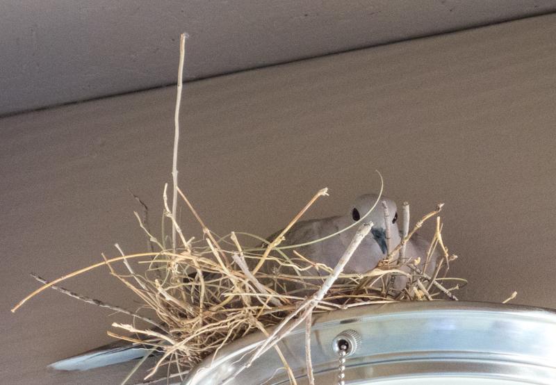 dove-nest_1