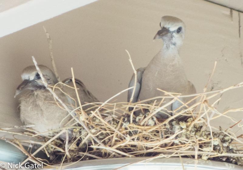 dove-nest_4