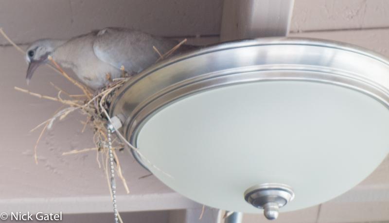 dove-nest_5