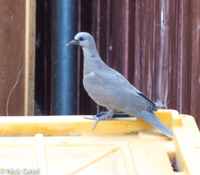 dove-nest_6